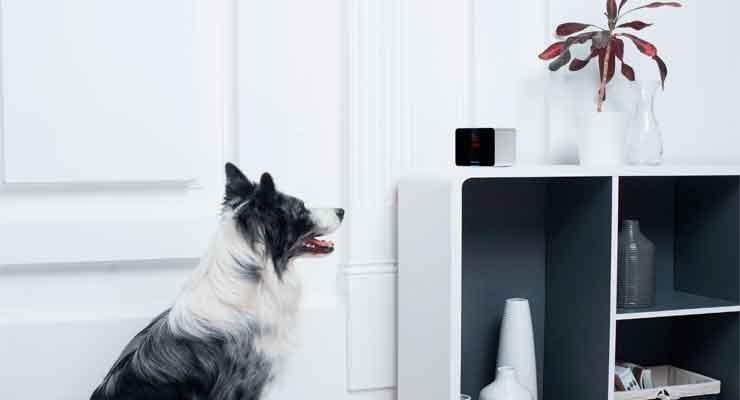 gadgets-para-perros