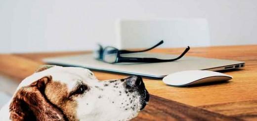 conoce-gadgets-para-perros